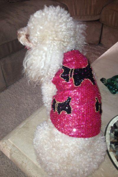 dog shirt scottie